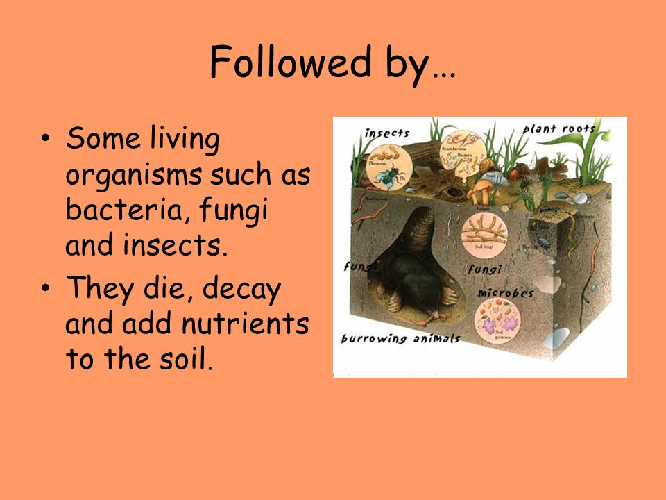 Followed by… Some living organisms such as bacteria, fungi and insects.