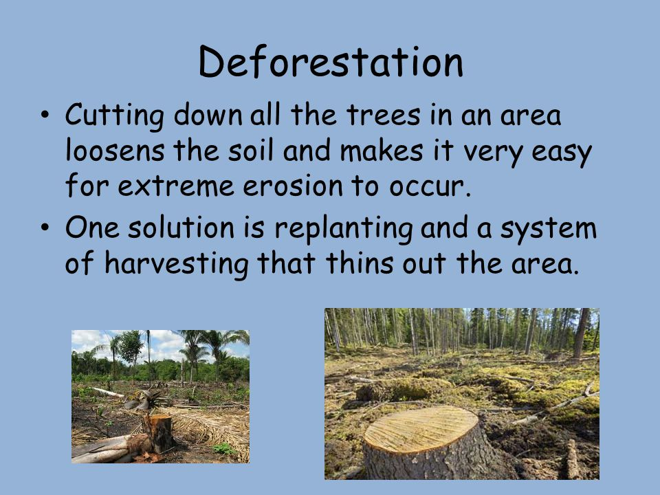 Deforestation Cutting down all the trees in an area loosens the soil and makes it very easy for extreme erosion to occur.