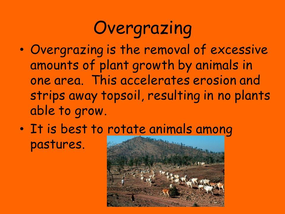 Overgrazing
