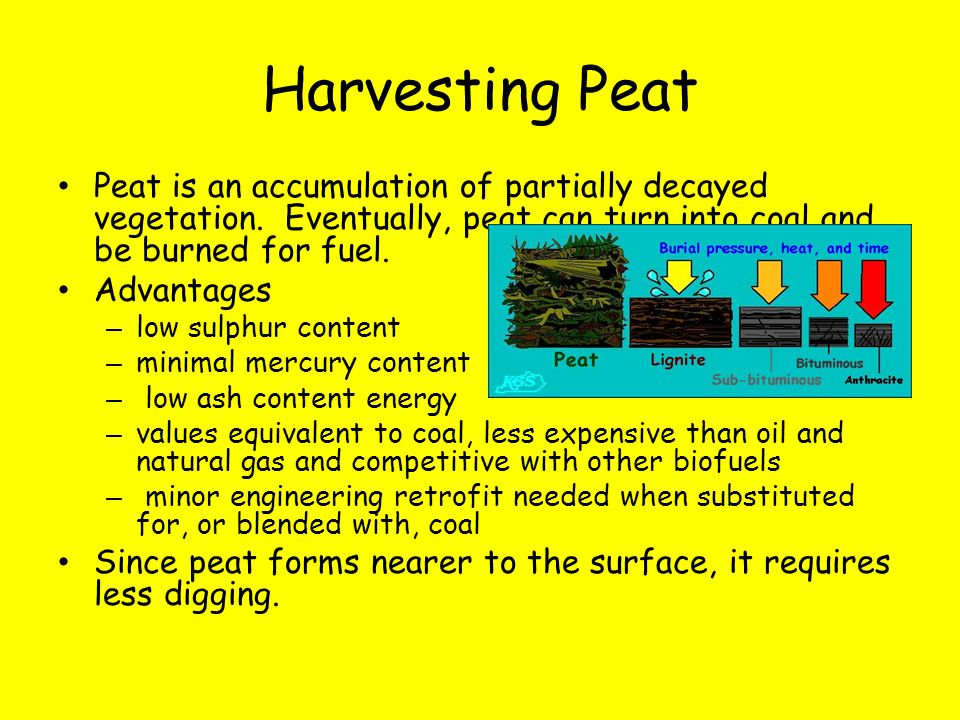 Harvesting Peat Peat is an accumulation of partially decayed vegetation. Eventually, peat can turn into coal and be burned for fuel.