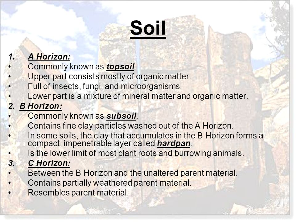A Horizon: Commonly known as topsoil. Upper part consists mostly of organic matter. Full of insects, fungi, and microorganisms.