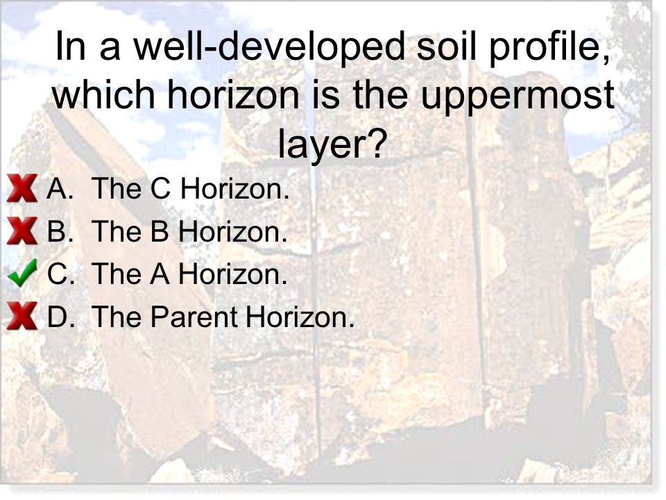 In a well-developed soil profile, which horizon is the uppermost layer