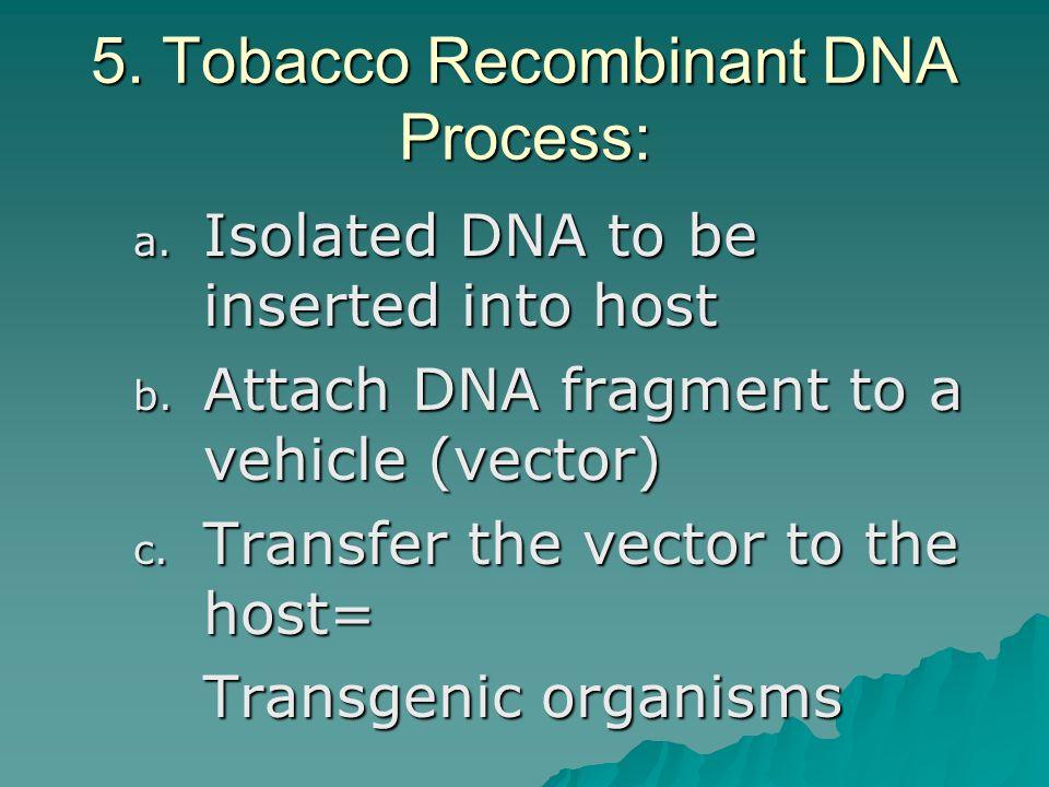 5. Tobacco Recombinant DNA Process: