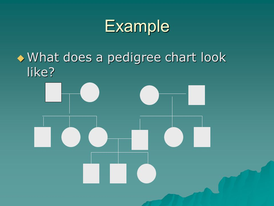 Example What does a pedigree chart look like