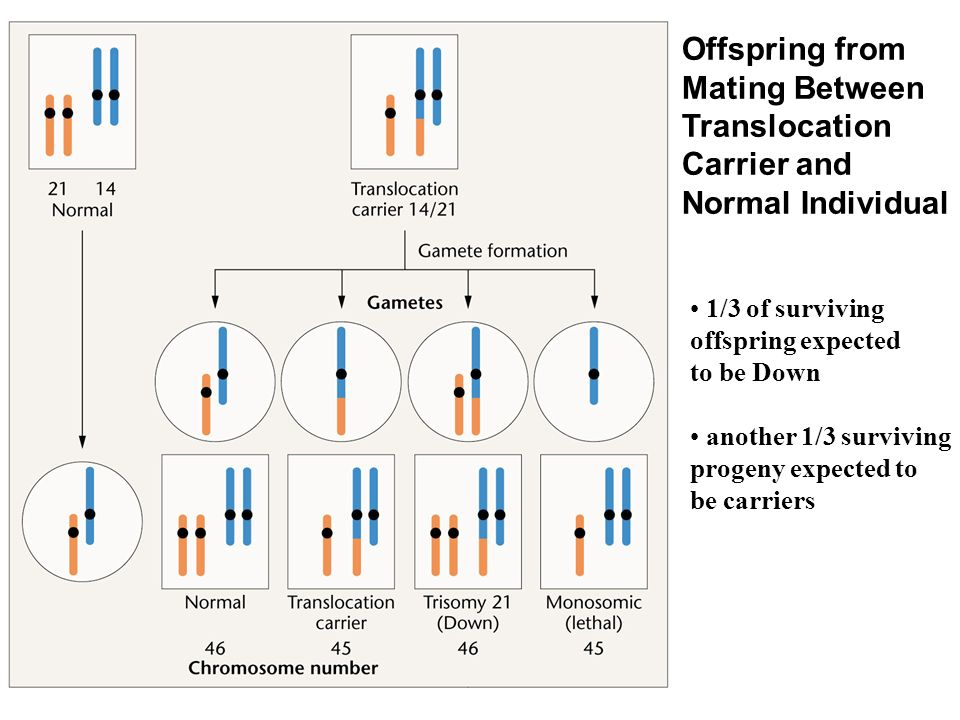 Offspring from Mating Between Translocation Carrier and Normal Individual