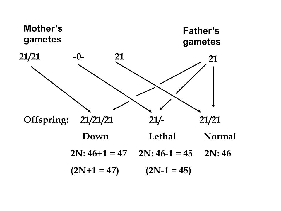 Mother's gametes 21/ Father's gametes. 21. Offspring: 21/21/21 21/- 21/21.
