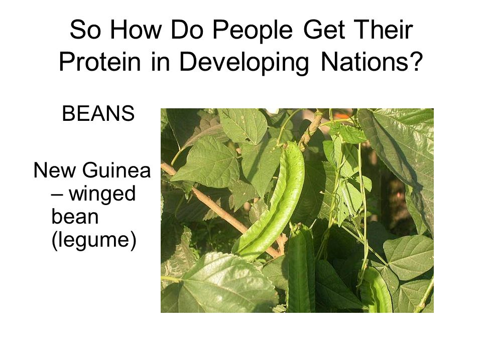 So How Do People Get Their Protein in Developing Nations