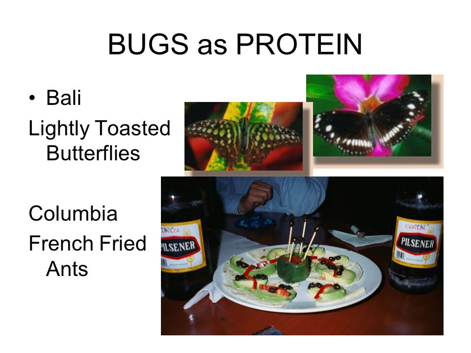 BUGS as PROTEIN Bali Lightly Toasted Butterflies Columbia