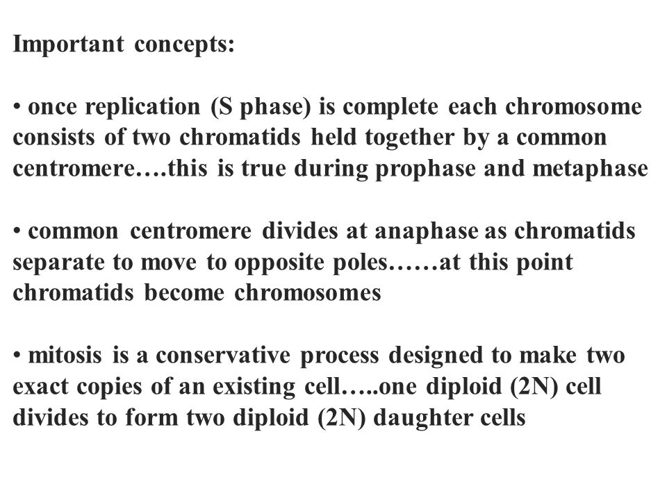Important concepts: once replication (S phase) is complete each chromosome. consists of two chromatids held together by a common.