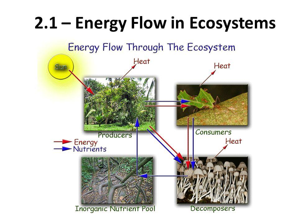 2.1 – Energy Flow in Ecosystems