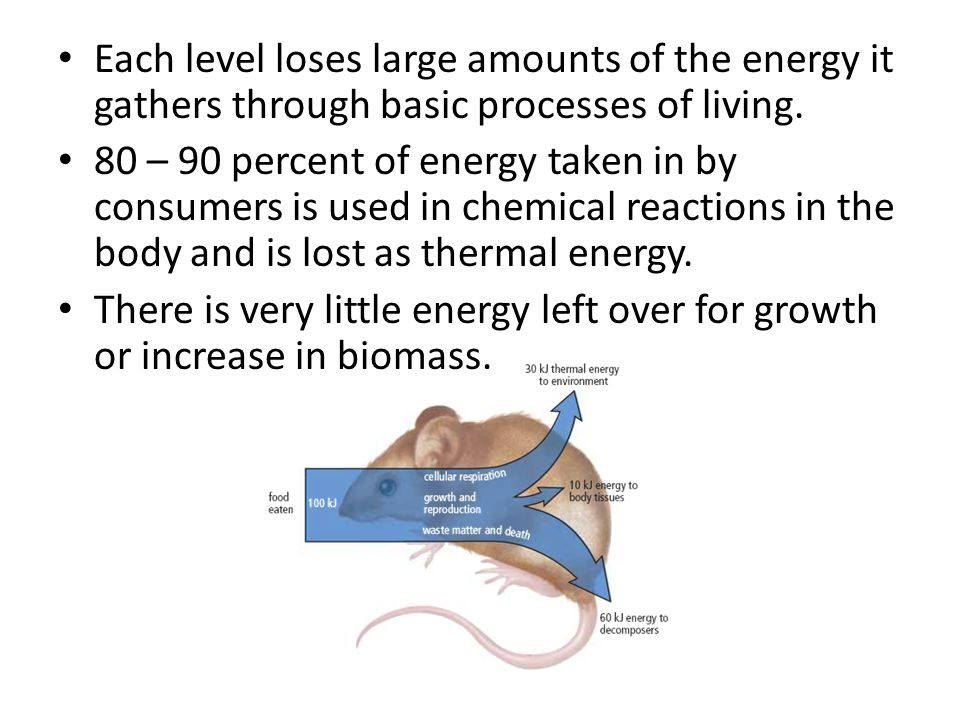Each level loses large amounts of the energy it gathers through basic processes of living.