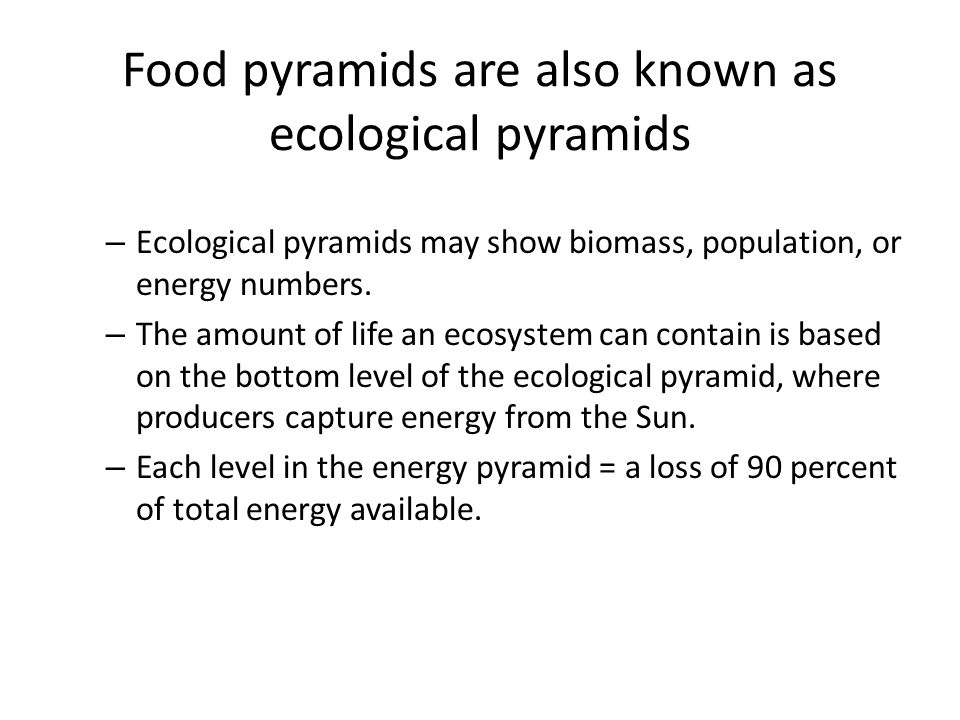 Food pyramids are also known as ecological pyramids