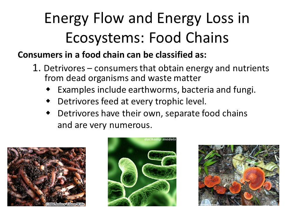 Energy Flow and Energy Loss in Ecosystems: Food Chains