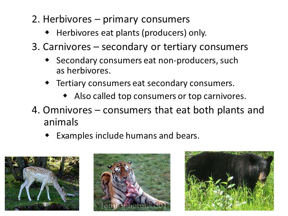 2. Herbivores – primary consumers