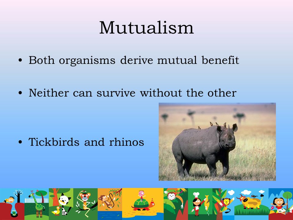 Mutualism Both organisms derive mutual benefit