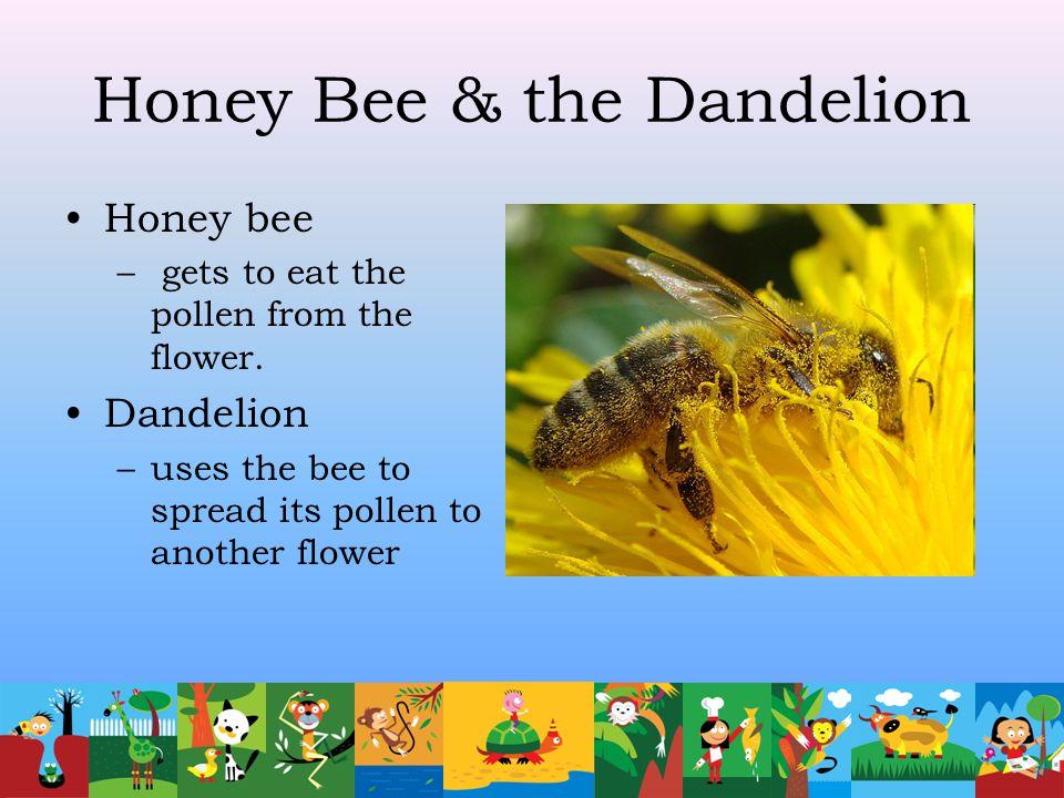 Honey Bee & the Dandelion