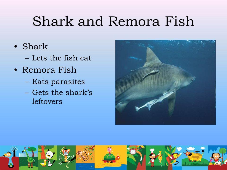 Shark and Remora Fish Shark Remora Fish Lets the fish eat