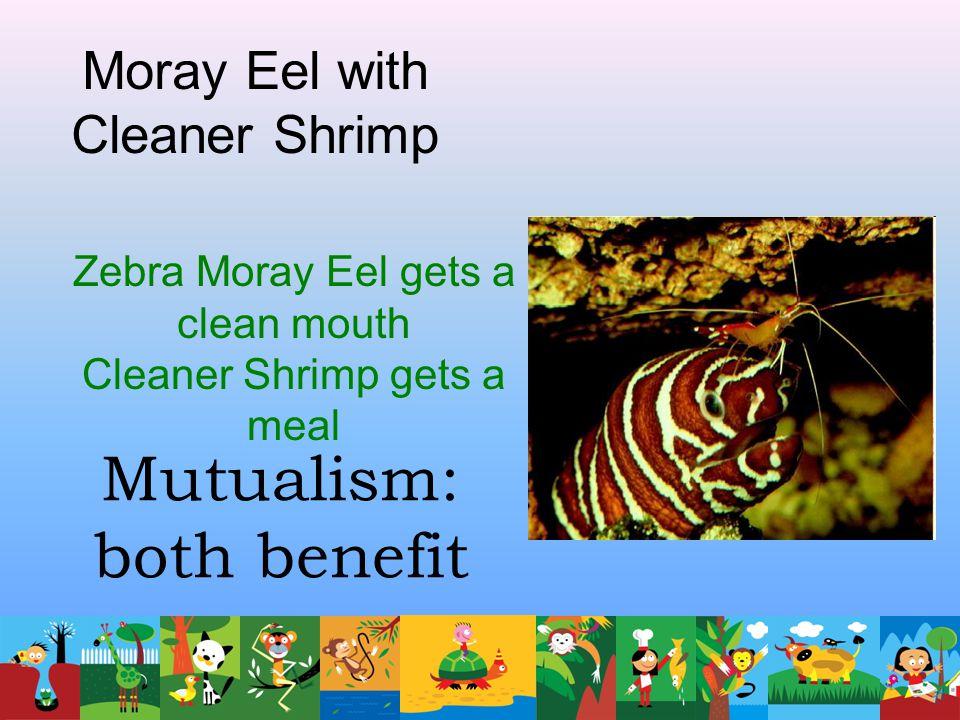 Mutualism: both benefit