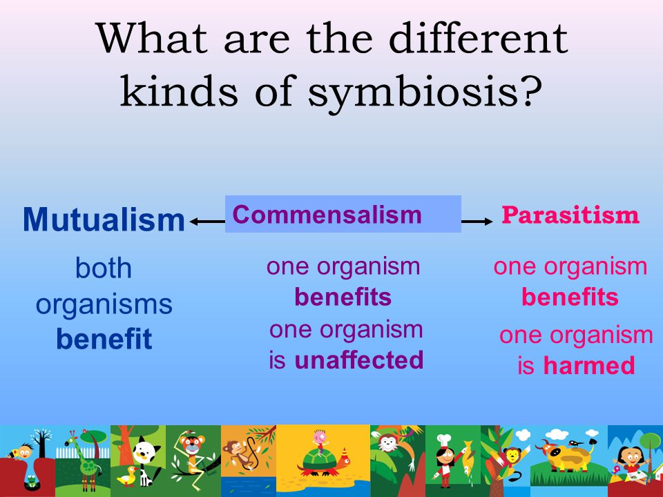 What are the different kinds of symbiosis