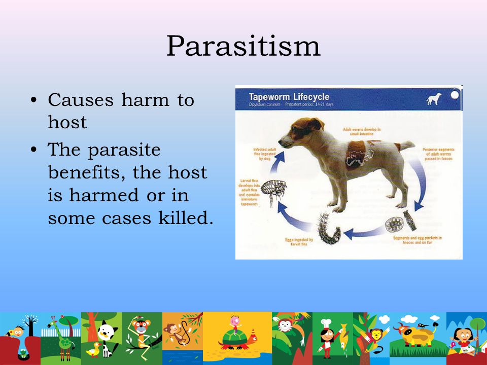Parasitism Causes harm to host