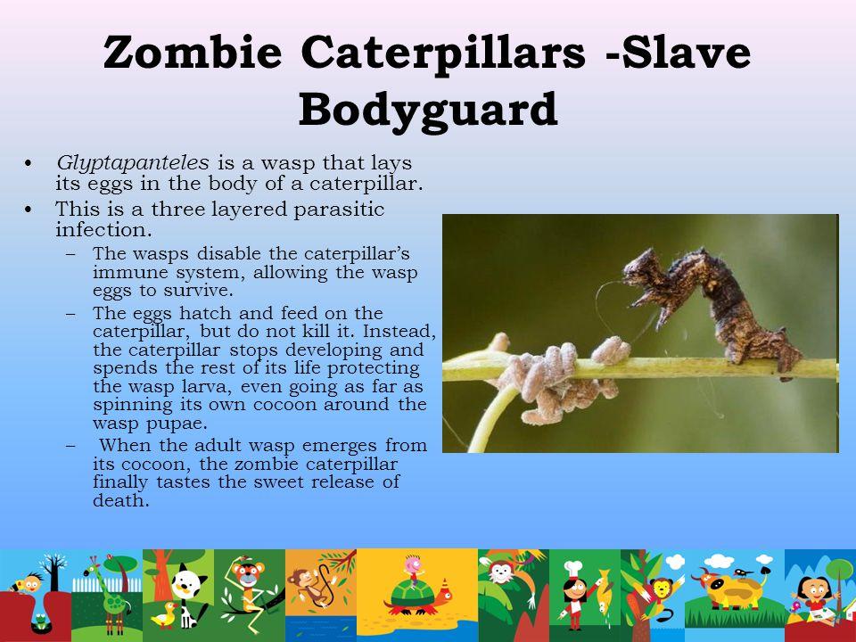 Zombie Caterpillars -Slave Bodyguard