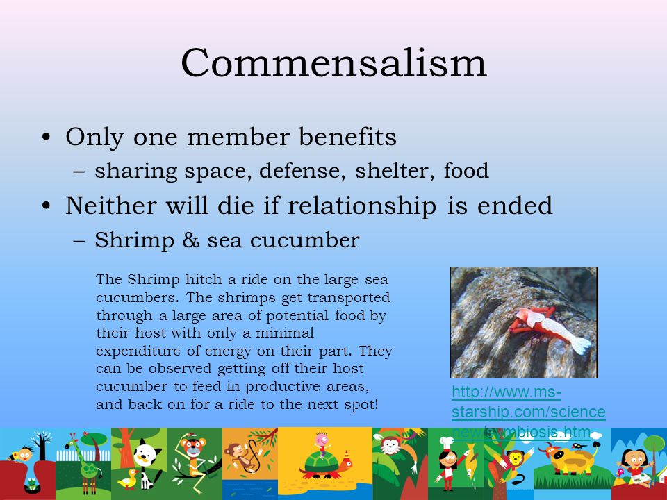 Commensalism Only one member benefits
