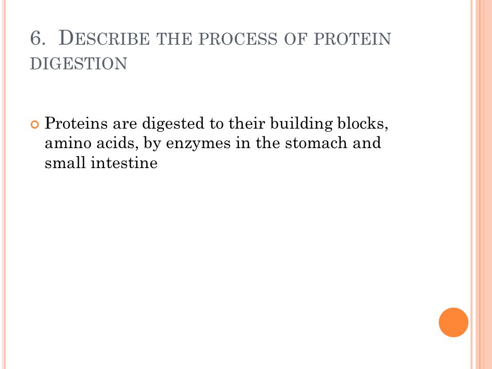 6. Describe the process of protein digestion