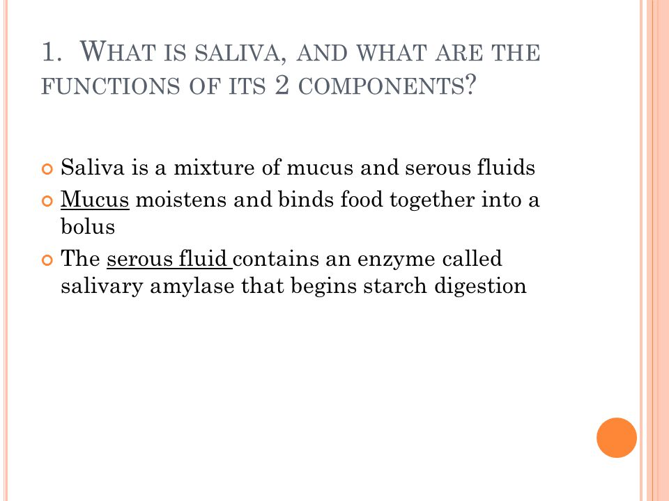 1. What is saliva, and what are the functions of its 2 components