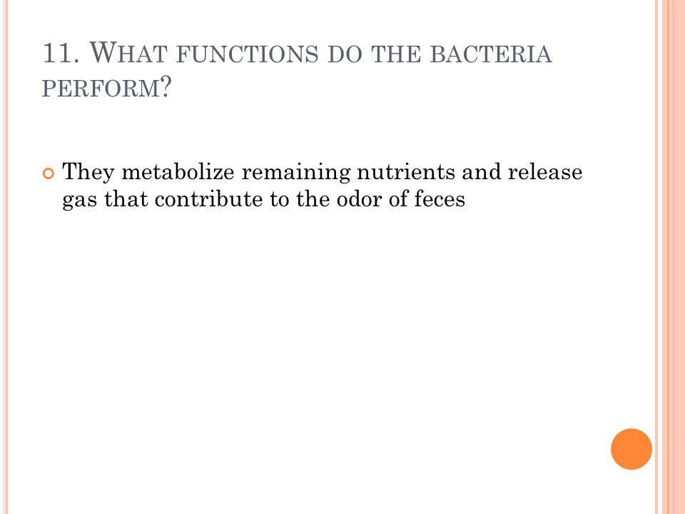 11. What functions do the bacteria perform