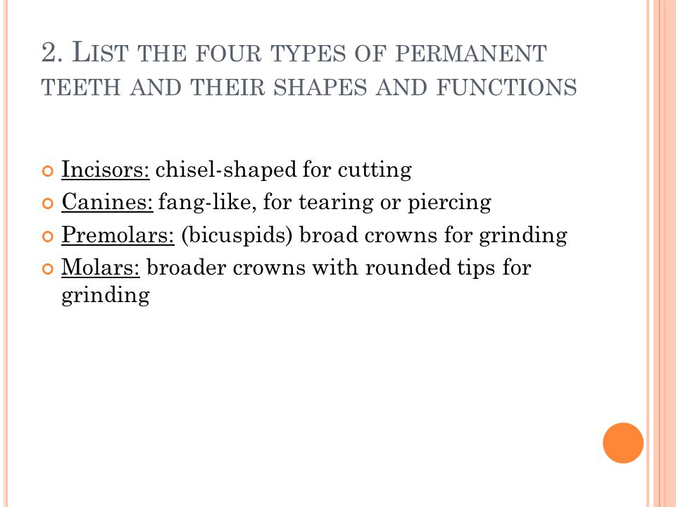 2. List the four types of permanent teeth and their shapes and functions