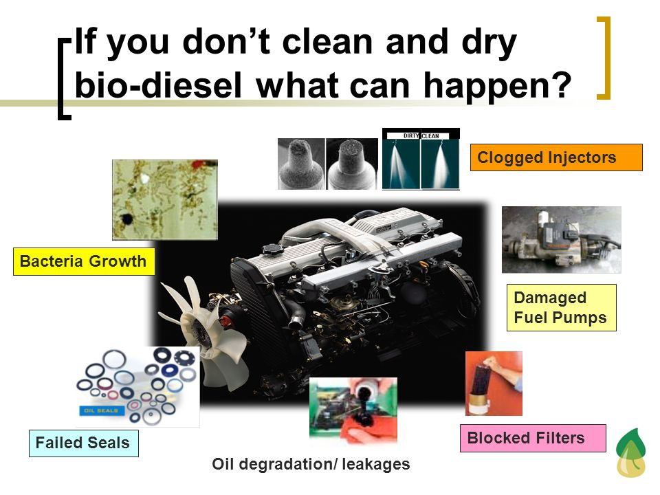 If you don't clean and dry bio-diesel what can happen