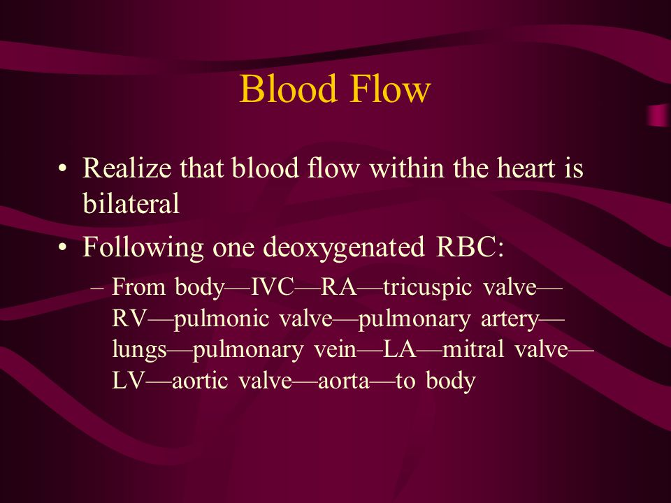 Blood Flow Realize that blood flow within the heart is bilateral