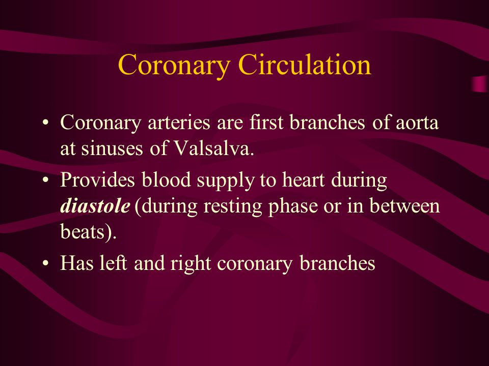 Coronary Circulation Coronary arteries are first branches of aorta at sinuses of Valsalva.