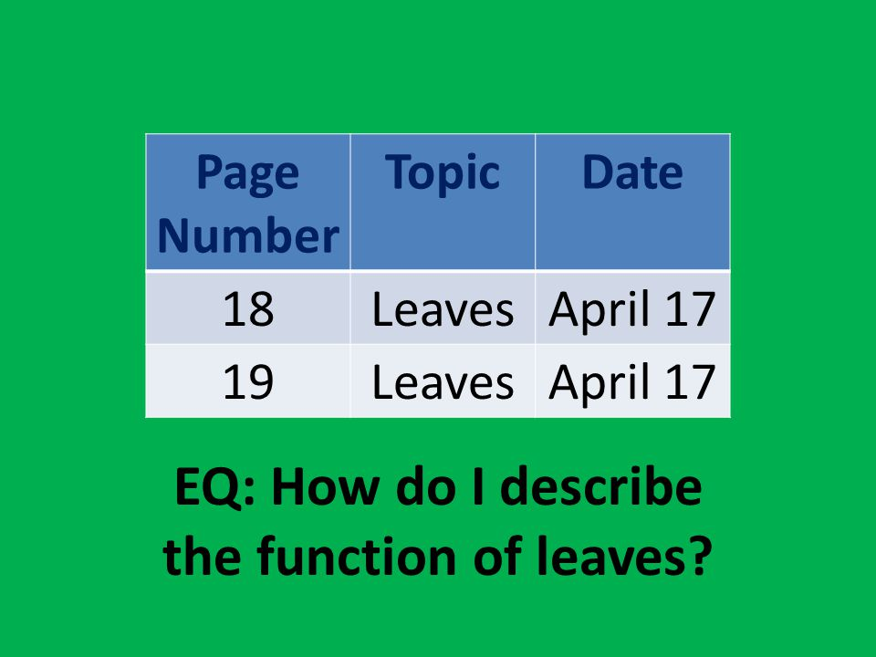 EQ: How do I describe the function of leaves