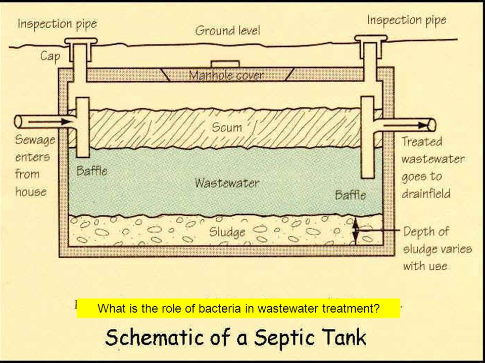 What is the role of bacteria in wastewater treatment
