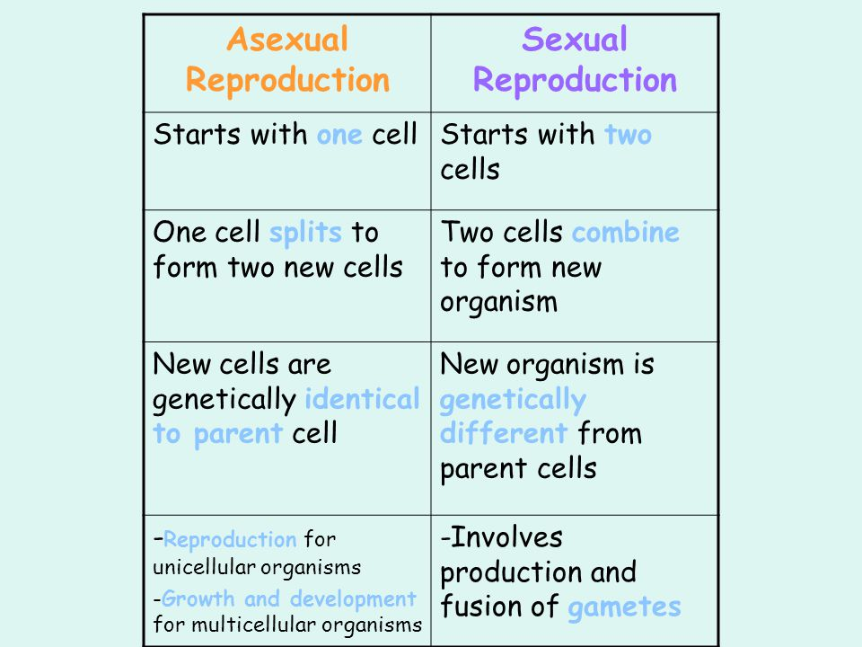 Asexual Reproduction Sexual Reproduction
