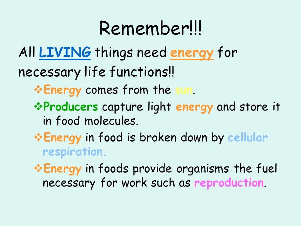 Remember!!! All LIVING things need energy for