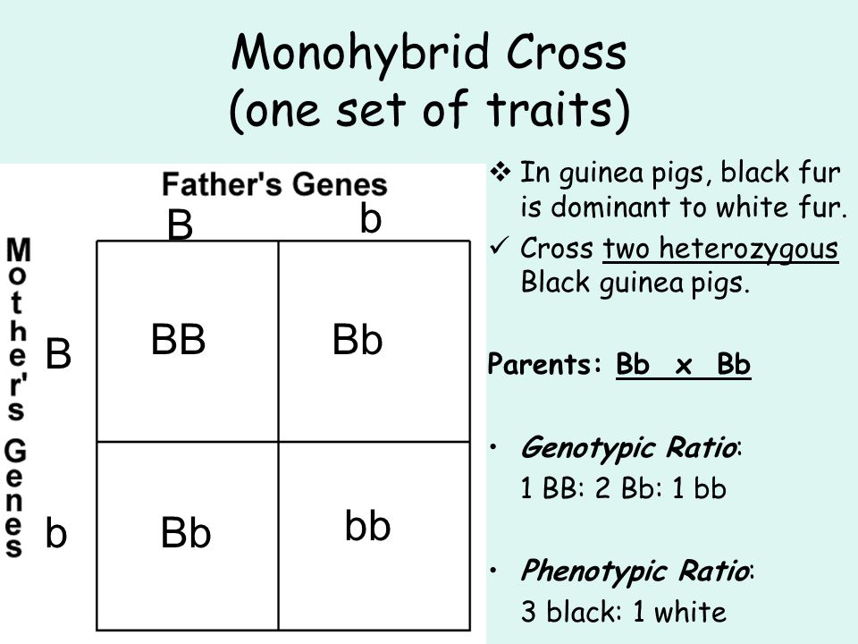 Monohybrid Cross (one set of traits)