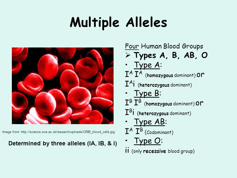 Multiple Alleles Types A, B, AB, O Type A: