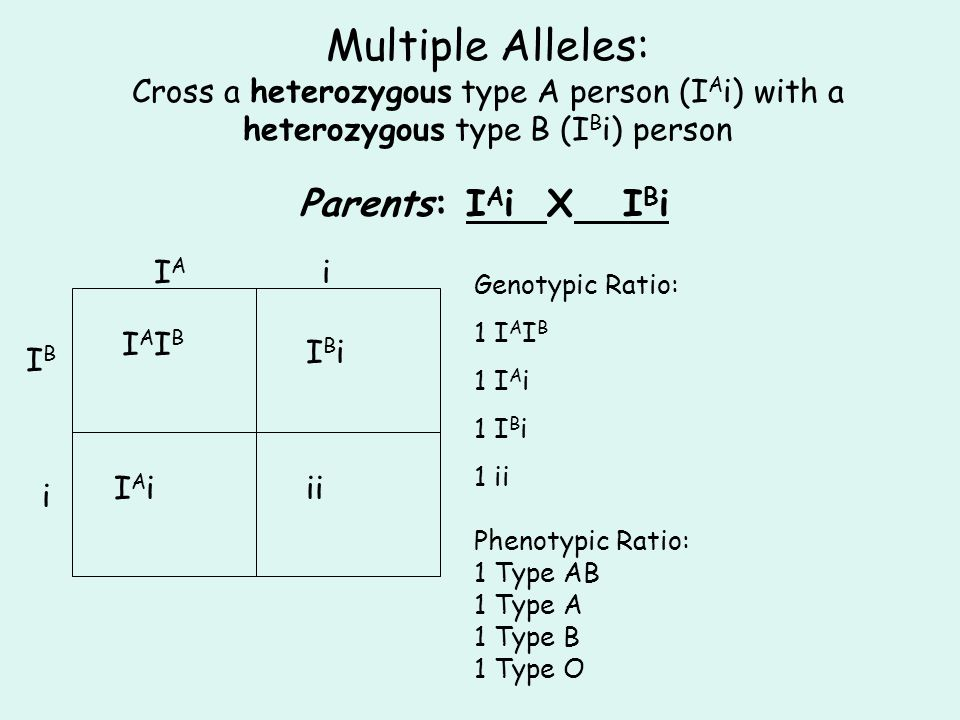 Multiple Alleles: Cross a heterozygous type A person (IAi) with a heterozygous type B (IBi) person