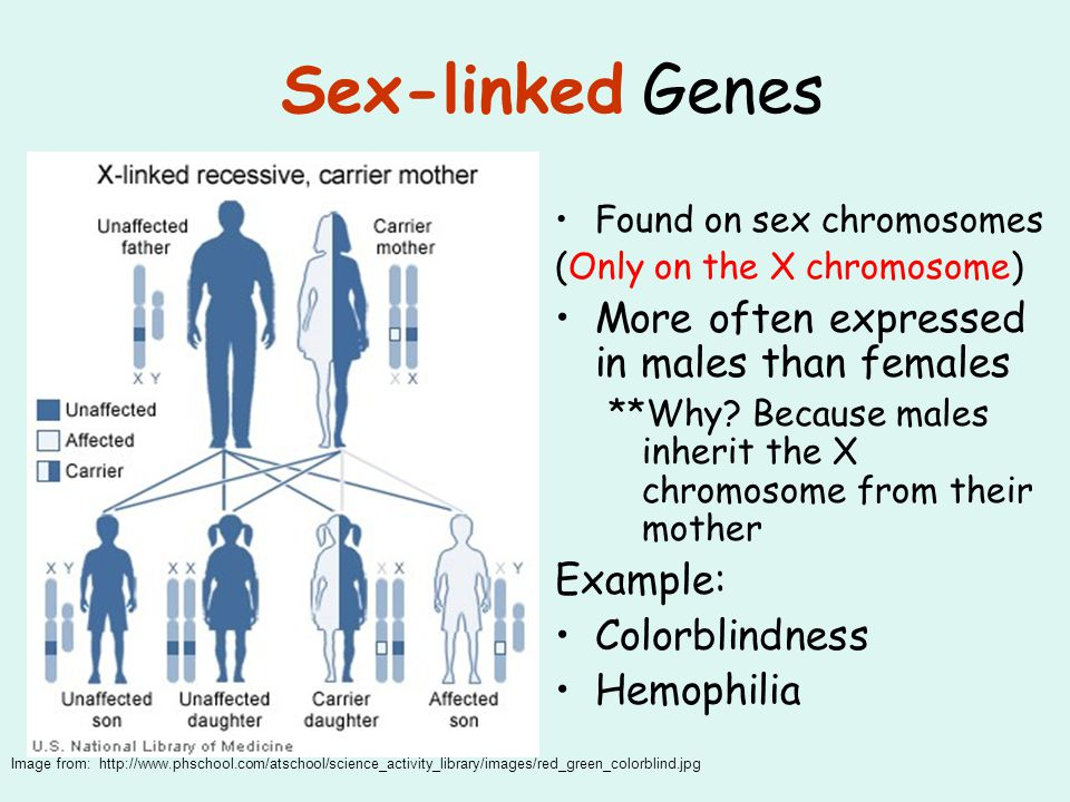 Sex-linked Genes More often expressed in males than females Example: