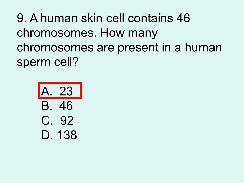 9. A human skin cell contains 46 chromosomes
