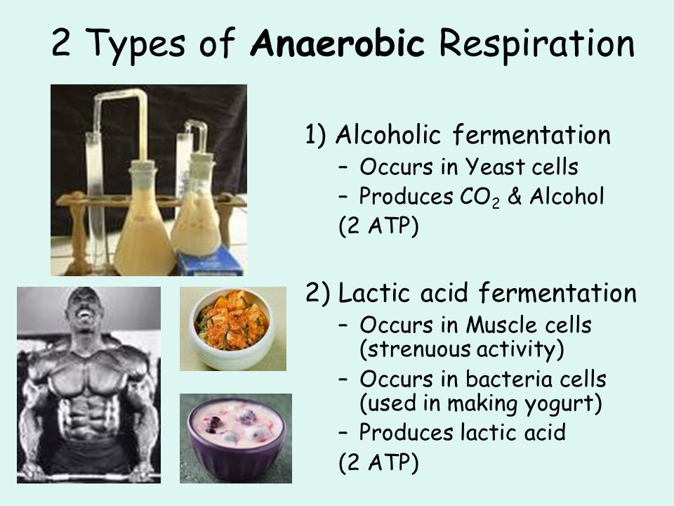 2 Types of Anaerobic Respiration