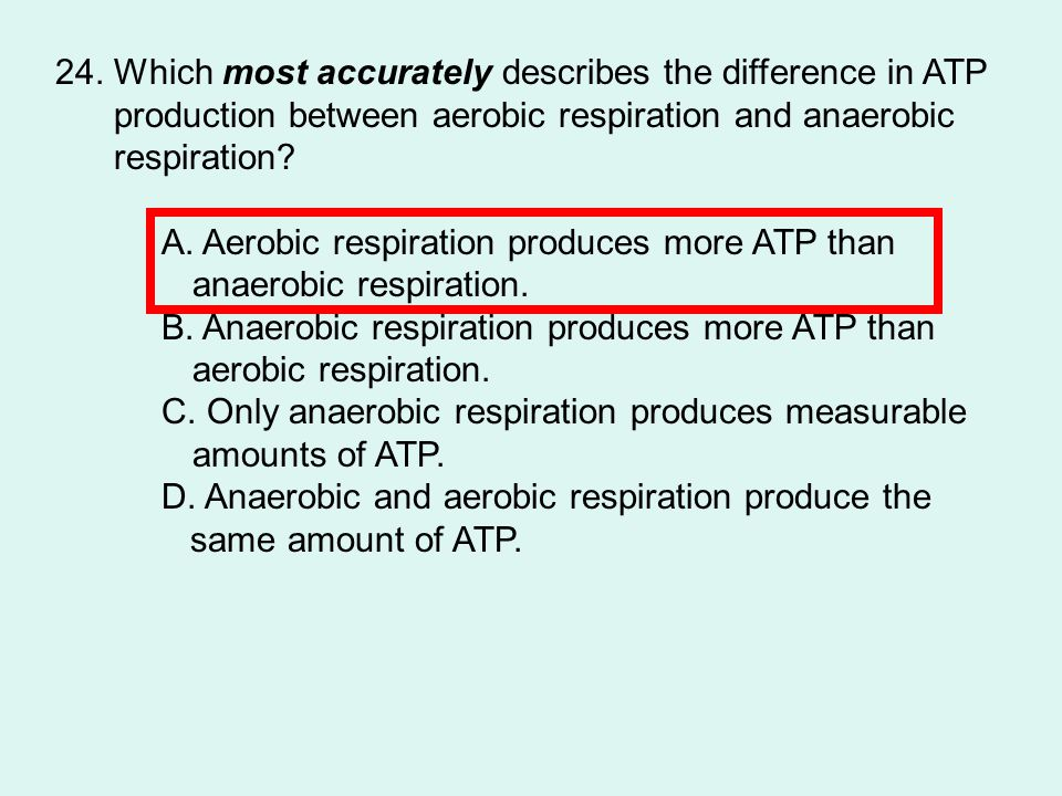 24. Which most accurately describes the difference in ATP