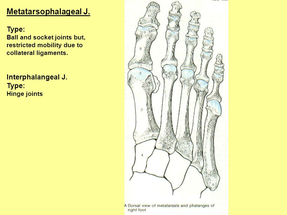 Metatarsophalageal J. Type: Interphalangeal J.