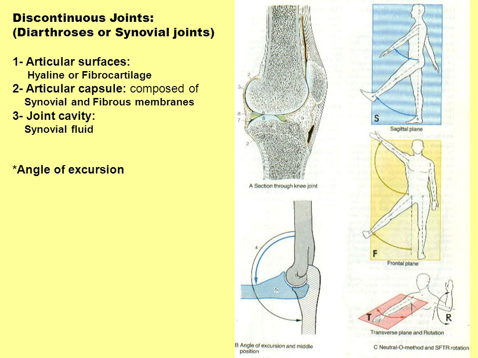 Discontinuous Joints: (Diarthroses or Synovial joints)