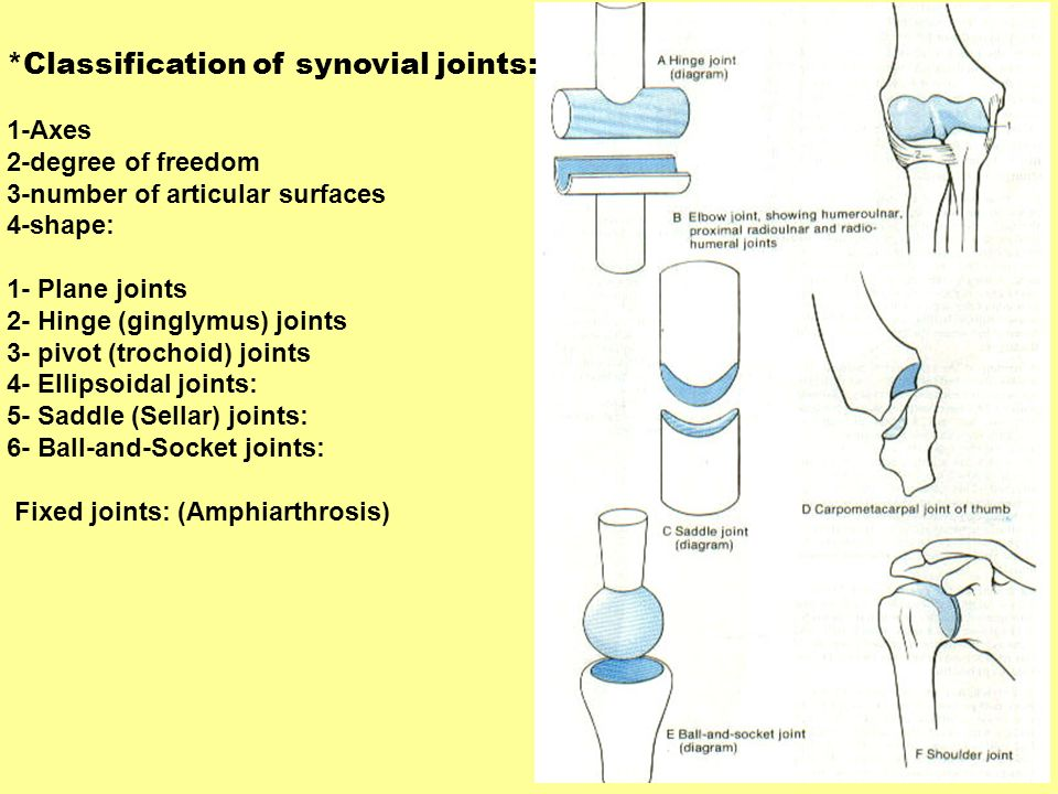 *Classification of synovial joints: