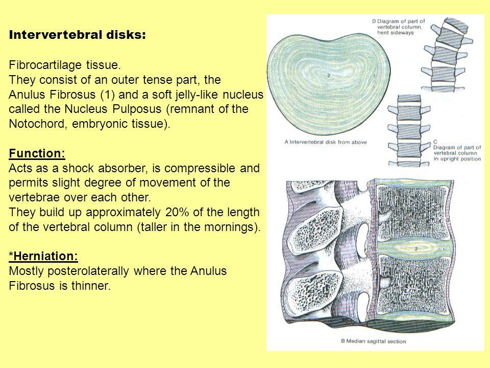 Intervertebral disks: