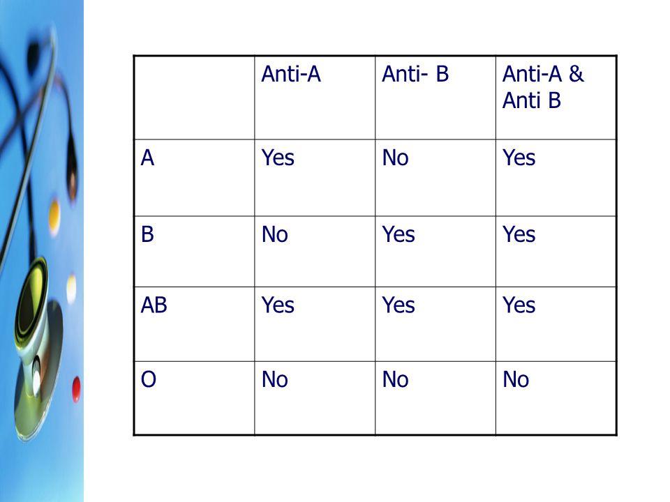 Anti-A Anti- B Anti-A & Anti B A Yes No B AB O