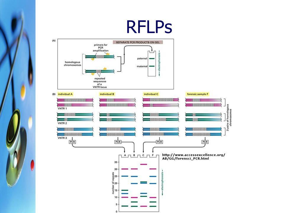 RFLPs